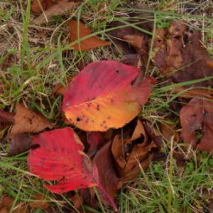 秋を求めてポタる