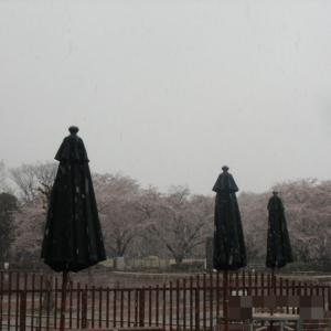 1363:いきなり雪かよ・・・(;'∀')
