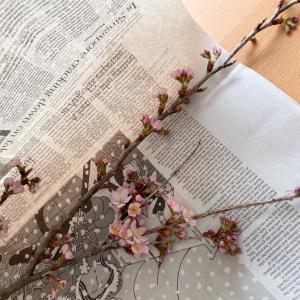 今週の春のお花 & コメダのキッズプレートとおまけがすごかったこと!