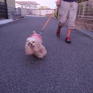 主人とみやびと私でお散歩。