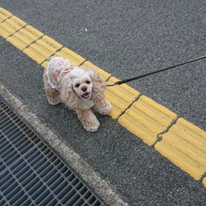 ご機嫌でお散歩。