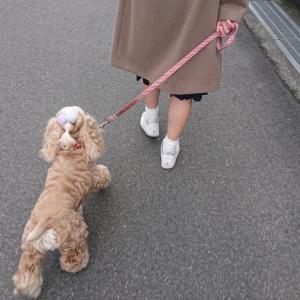 一緒にお散歩。