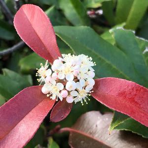 生垣のお花