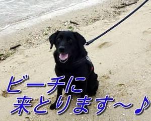 夕暮れの・・「 海散歩 」~♪