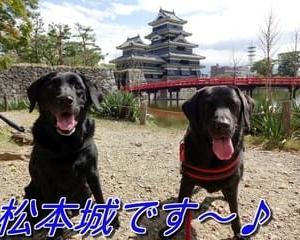 初めての「 松本城 」なの~ん♪
