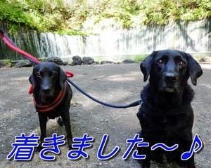 軽井沢の「 白糸の滝 」を観光~♪