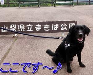 早朝の「 まきば公園 」をお散歩~♪