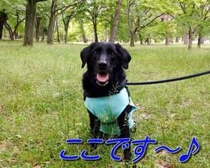 「 京都御苑 」をお散歩~♪