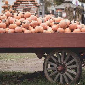 投資詐欺|スルガ銀行の借金帳消し特例発動でかぼちゃの馬車事件は解決へ!