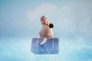 コロナで海外への修学旅行が中止!・・・にならず。