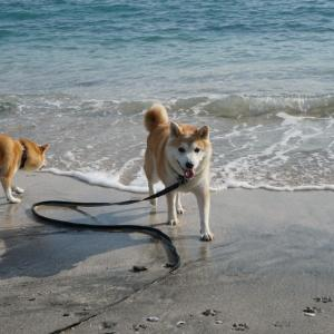 今夏の海水浴は…