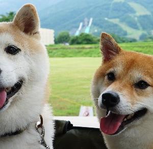 日本の原風景がありました。