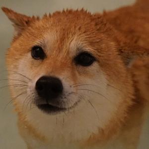 入浴チューよ。
