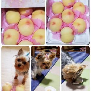 美味しい桃頂きました