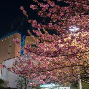 滑り込みの桜撮影
