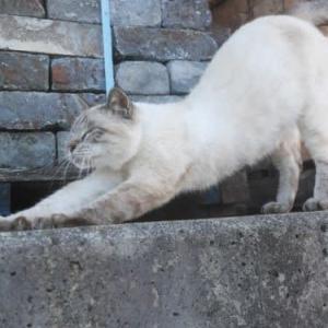 外猫メロンちゃん、とうとう保護しました。
