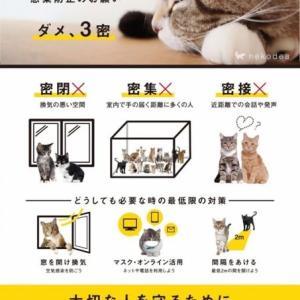 猫の日暮らしの活動、7年目の春になります〜
