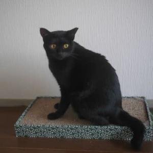 黒猫セシルトライアルへ、次はモワちゃんの幸せ探し〜