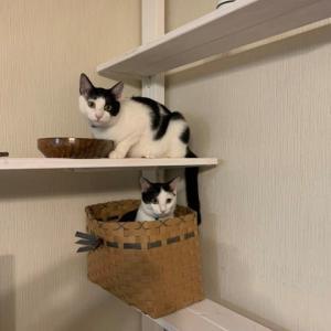 今年の子猫たち、幸せ報告たくさんいただいています〜
