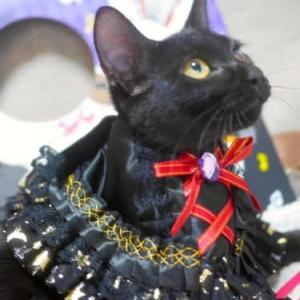 10/31(土)キャットソシオン黒猫の譲渡会、アミユミ姉妹