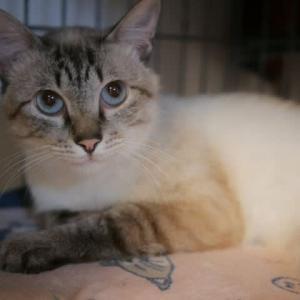 ミントくん、お家の猫さんになる事ができました!