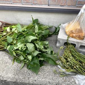 山菜と薪割り
