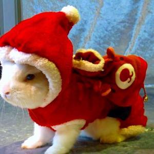 """12月うきうき♪うさんぽ会""""クリスマスパーティ♪""""のお申し込みはこちらです。"""
