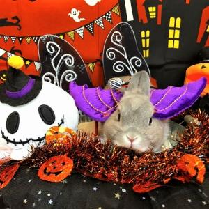 キキたんの初めてのハロウィンパーティー♪うきうき♪うさんぽ会inイオンペット