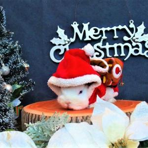 14日のクリスマスパーティのフォトスポットはクリスマス&お正月です♪