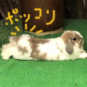ペコのプリケツ第2弾!!