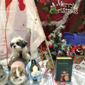 クリスマスフォトスポットで全員集合写真にチャレンジ!!