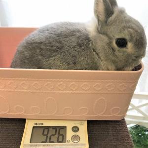 芸術家風のポコ グルーミング&体重測定