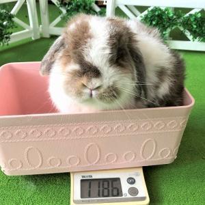 ペコのホームグルーミング&体重測定