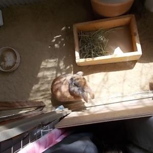 うさぎ 【動画】日射しを浴び 就寝前の身づくろい