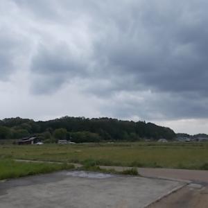 うさぎ 雨の明日香路(昨日)