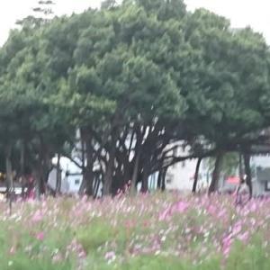 台湾の優しさ