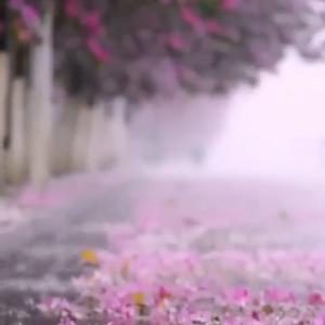 Spring  rains !                Gabriele氏の画像より
