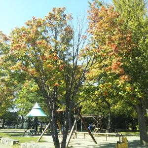 神社隣公園