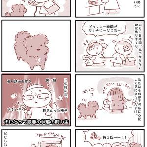 【犬漫画】焦ってる飼い主は怖い
