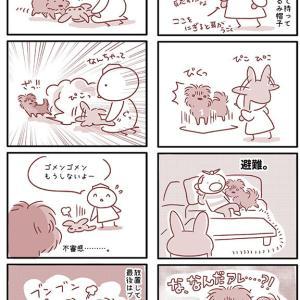【犬漫画】うさ耳帽子にビビる犬