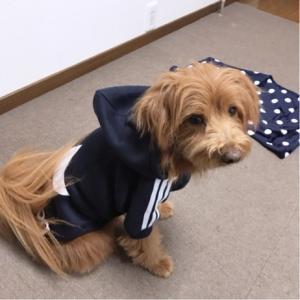 【犬服】わんこ用福袋2020レビュー【Anzudog】