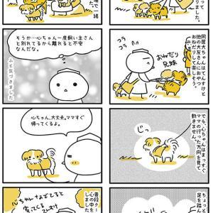 【犬漫画】シニア犬の心が見えた気がしました。