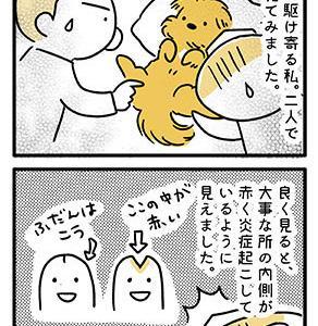 【犬漫画】てんすけの大事なところに…。
