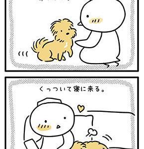 【犬漫画】歳を取るにつれて甘えん坊になってきた気がする。