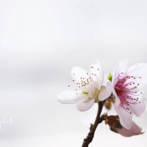 ベランダでほっこりした話♡ 諦めなければ、花は咲きます♡