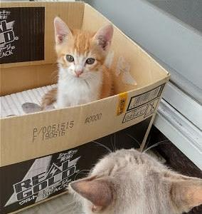 ソト猫 コマミとコトラ親子のその後・・・