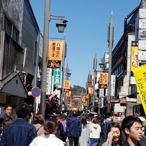 鎌倉サクラ2020若宮大路