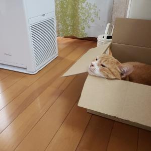 鎌倉サクラ2020 ホテルニューカマクラ