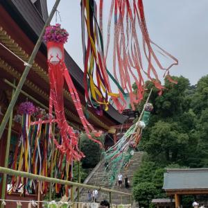 鎌倉鶴岡八幡宮の蓮