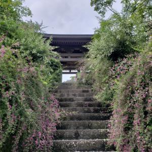 秋の鎌倉花情報2020 海蔵寺 瑞泉寺